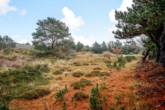 Fritidsgrund på Møllehusvej i Blåvand - Område
