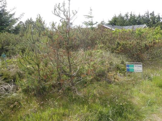 Fritidsgrund på Hagevej i Ulfborg - Grund