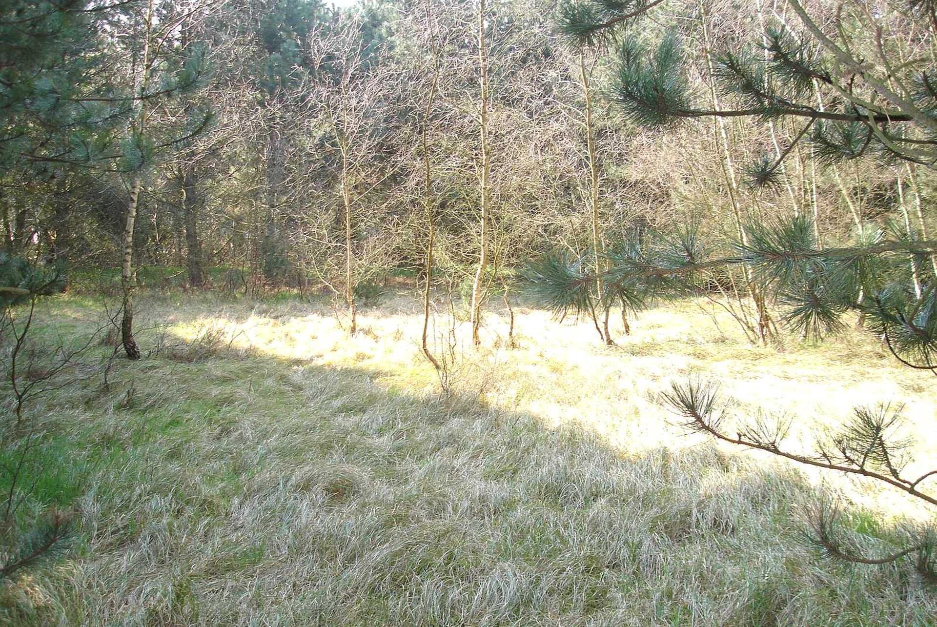 Fritidsgrund på Spurvevænget i Rødby - Grund