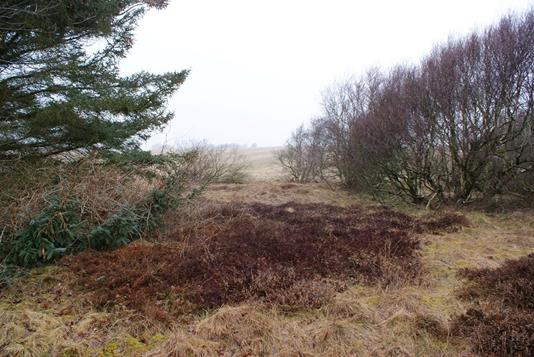 Fritidsgrund på Ydunsvej i Thyholm - Grund