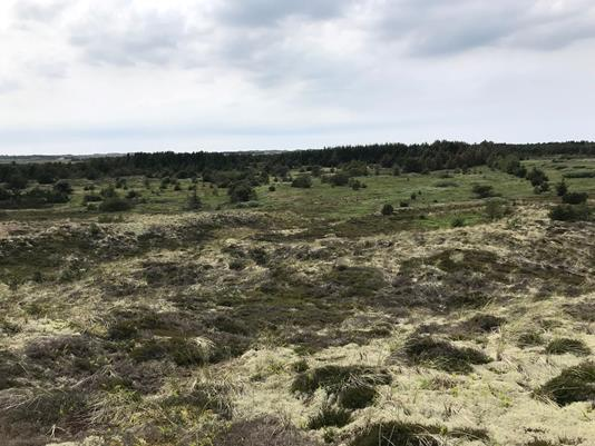 Helårsgrund på Kystvejen i Thisted - Grund